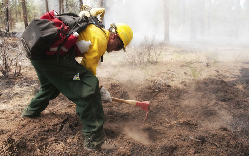 Catch 22 - DACA Wildland Firefighter